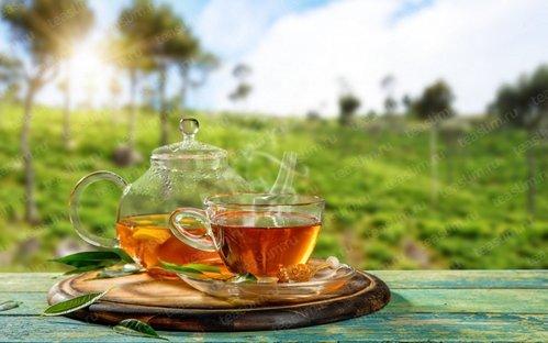 Чай для похудения в аптеках - какой лучше: отзывы и цена, противопоказания